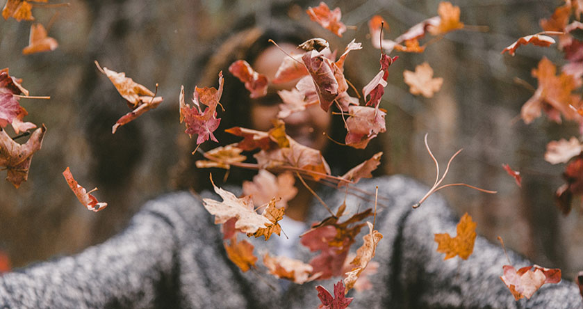 Imagen otoñal con hojas en un bosque